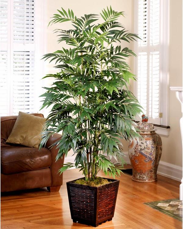 Pokok Mudah Jaga 04