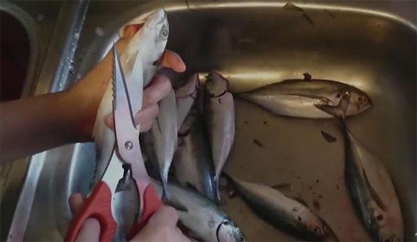 cara paling senang siang ikan